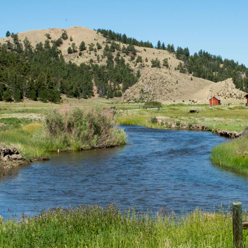 Creek on a Cattle Ranch